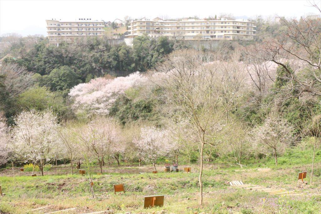 水明台エドヒガンの森 記念植樹エリア